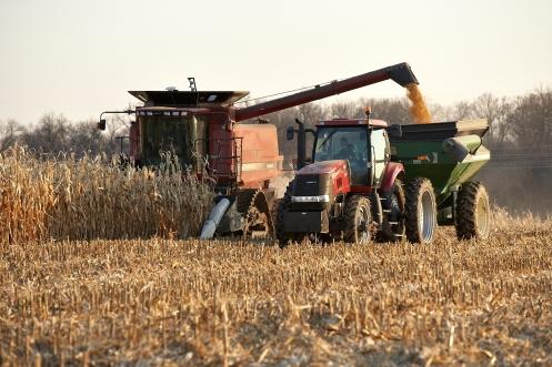 (c) AgriLife Studios, Nov. 2009. Corn harvest, Rogers, MN.