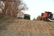 (c) AgriLife Studios Nov. 2009. Corn harvest, Rogers, MN.